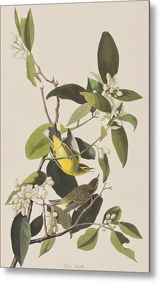 Palm Warbler Metal Print by John James Audubon