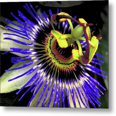 Passion Flower Metal Print by Martin Newman