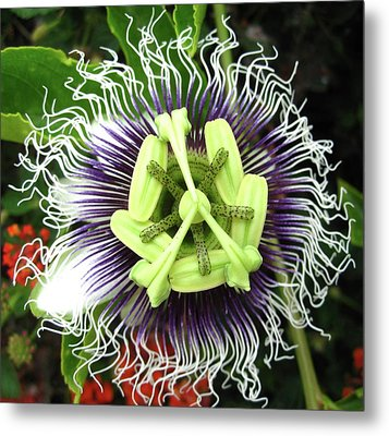 Passion Flower Metal Print by Mary Ellen Frazee