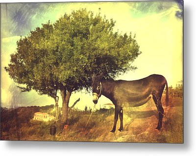 Pause For Thought Metal Print by Tom Gowanlock