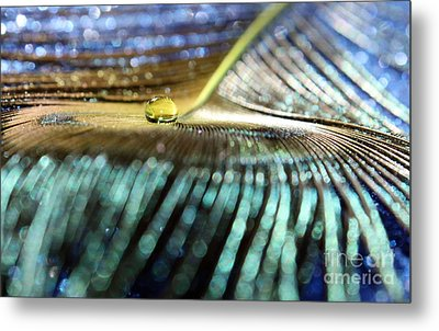 Peacock Gold Metal Print by Krissy Katsimbras
