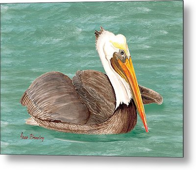 Pelican Floating Metal Print by Anne Beverley-Stamps