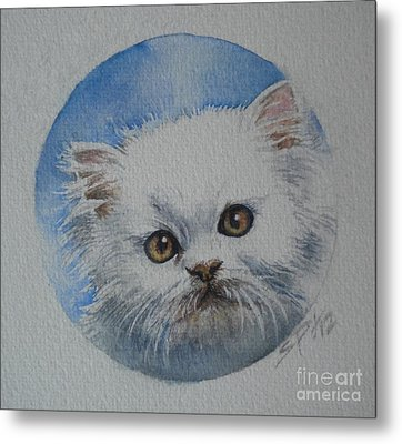 Persian Kitten Metal Print by Sandra Phryce-Jones