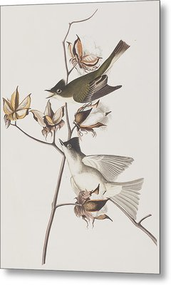 Pewit Flycatcher Metal Print by John James Audubon