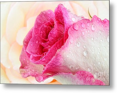 Pink Metal Print by Mark Johnson