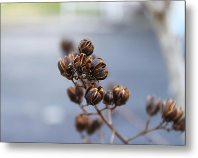 Pods Metal Print by Evelyn Patrick