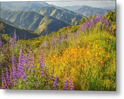 Poppies And Lupine Metal Print by Marc Crumpler