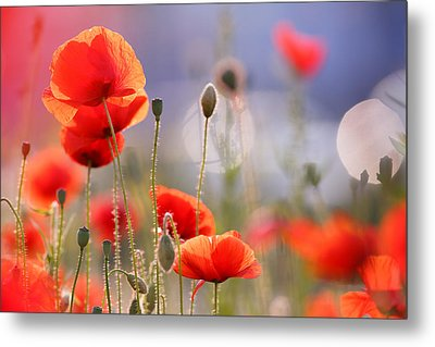 Poppy Delight Metal Print by Roeselien Raimond