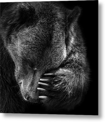 Portrait Of Bear In Black And White Metal Print by Lukas Holas