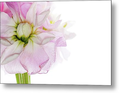 Metal Print featuring the photograph Pretty In Pink by Rebecca Cozart