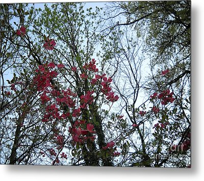 Metal Print featuring the photograph Primavera by Reina Resto