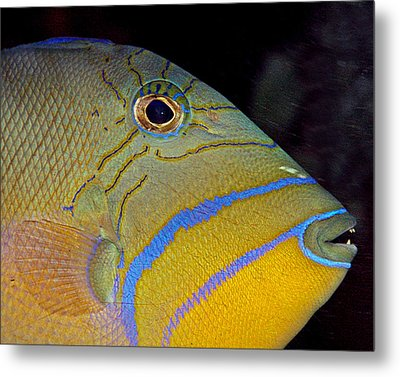 Queen Triggerfish Metal Print by Larry Linton