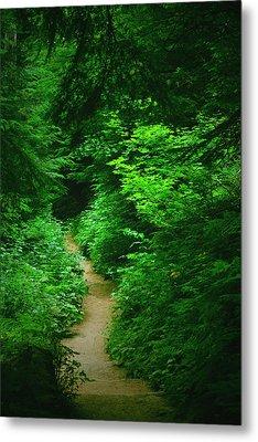 Rain Forest Walk Metal Print