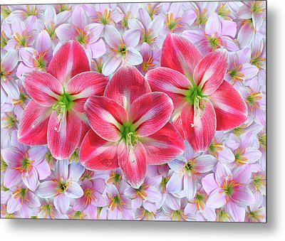 Red Amaryllis Metal Print by Edwin Verin