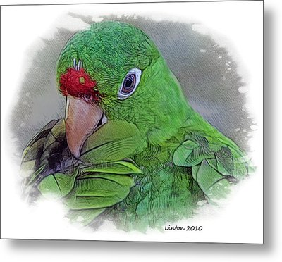 Red Lored Parrot Metal Print by Larry Linton