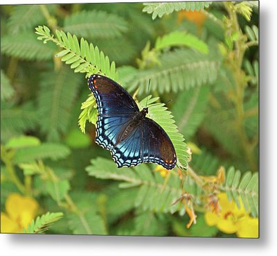 Metal Print featuring the photograph Red Spotted Purple Butterfly by Sandy Keeton