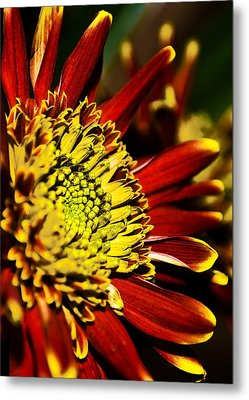 Red Metal Print by Svetlana Sewell