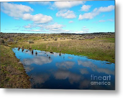 Metal Print featuring the photograph Reflections Of Spring by Mike Dawson
