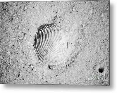 Ribbed Sea Shell In Fine Wet Sand Macro Black And White Metal Print by Shawn O'Brien