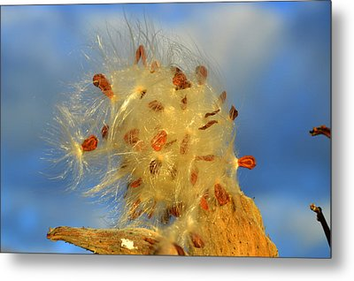 Rise And Shine Metal Print by Dianne Cowen