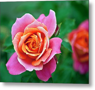 Metal Print featuring the photograph Rose by Bill Barber