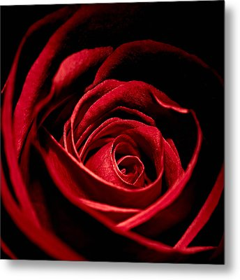 Rose I Metal Print by Andreas Freund