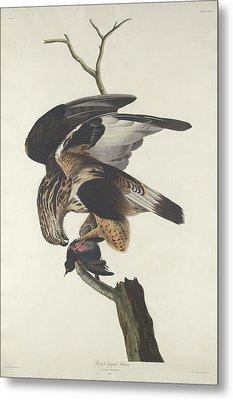 Rough Legged Falcon Metal Print by Rob Dreyer