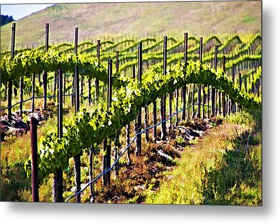 Rows Of Vines Metal Print by Patricia Stalter