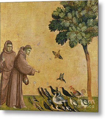 Saint Francis Of Assisi Preaching To The Birds Metal Print by Giotto di Bondone