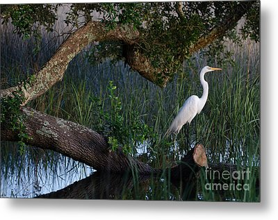 Salt Marsh Heron Metal Print