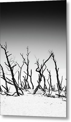 Metal Print featuring the photograph Sand Dune With Dead Trees by Chevy Fleet