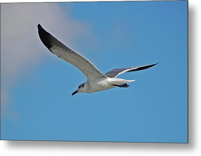 Metal Print featuring the photograph 1- Seagull by Joseph Keane