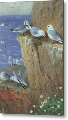 Seagulls Metal Print by Archibald Thorburn