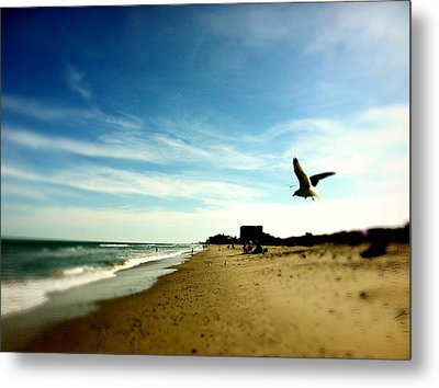 Seagulls At The Beach. Metal Print