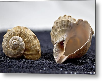 Seashells On Black Sand Metal Print