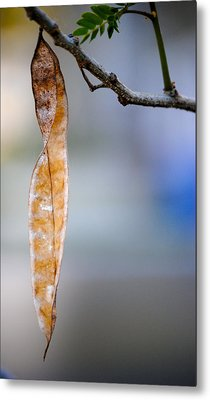 Seed Pod Metal Print by Bransen Devey