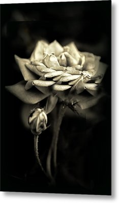 Sepia Rose Metal Print by Jessica Jenney