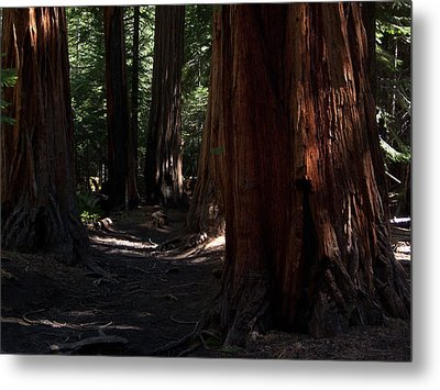 Sequoias On Half Dome Trail Metal Print by Bransen Devey