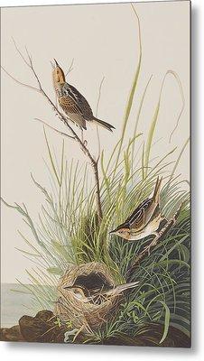 Sharp Tailed Finch Metal Print by John James Audubon