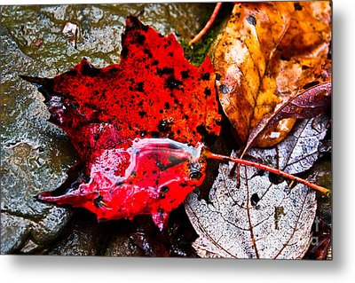 Signs Of Autumn Metal Print