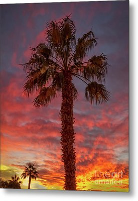 Silhouetted Palm Tree Metal Print by Robert Bales