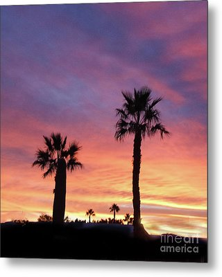 Silhouetted Palm Trees Metal Print by Robert Bales