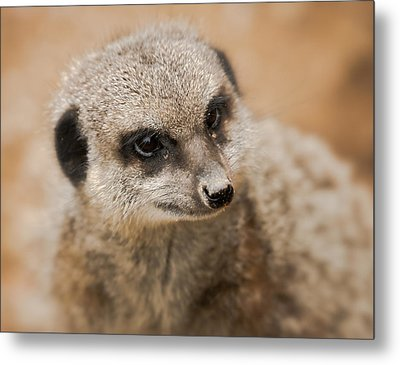 Metal Print featuring the photograph Simples by Chris Boulton