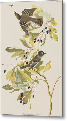 Small Green Crested Flycatcher Metal Print by John James Audubon