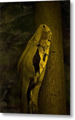 Snake Metal Print by Svetlana Sewell