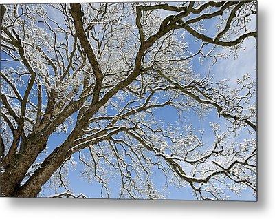 Winter Branch Metal Print by Tim Gainey