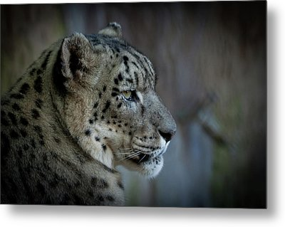 Metal Print featuring the photograph Snow Leopard by Roger Mullenhour