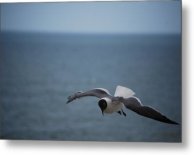 Metal Print featuring the photograph Soaring by Debbie Karnes