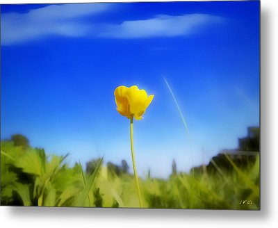 Solitary Flower Metal Print