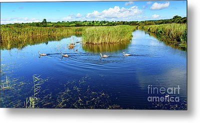 Somerset Levels Metal Print by Colin Rayner